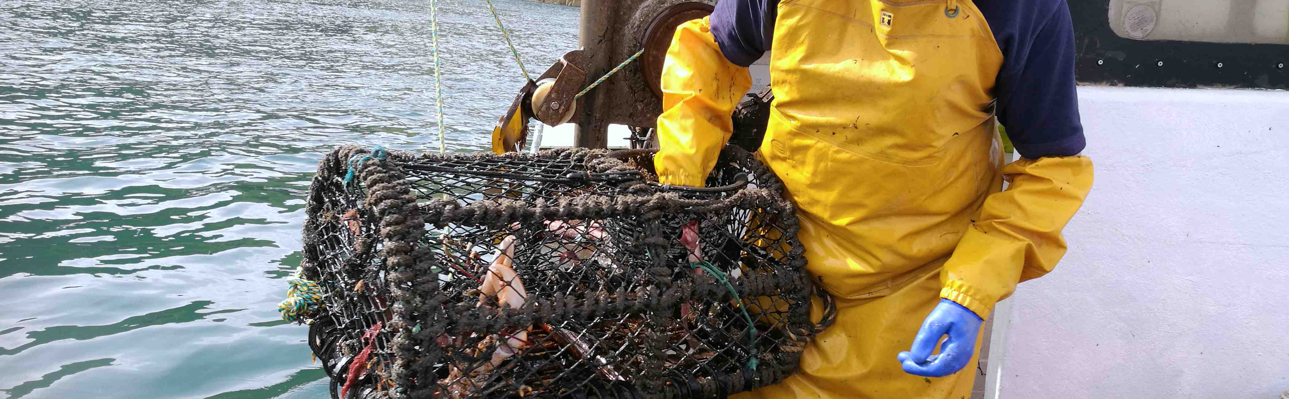 Fresh shellfish being caught on a boat.